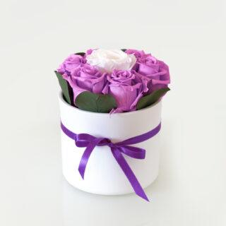 Uinuvad lillad roosid 7TK
