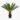 Palmlehik cycas revoluta