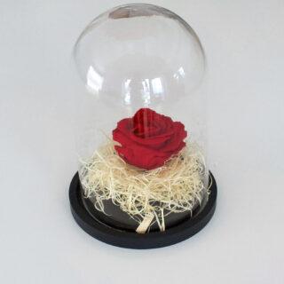 Uinuv punane roos klaaskuplis