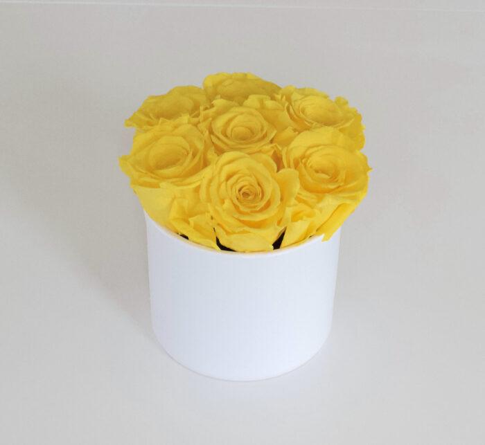 Uinuvad kollased roosid 7TK