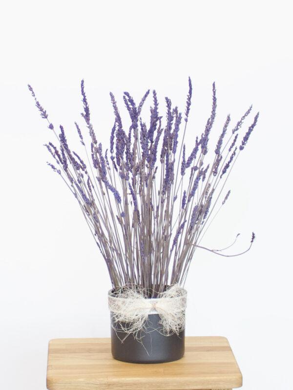 Kauasäiliv lavendel potis